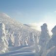 樹氷の斜面