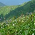 羽後朝日岳のお花畑4
