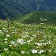 羽後朝日岳のお花畑2