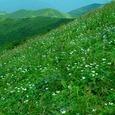 羽後朝日岳のお花畑